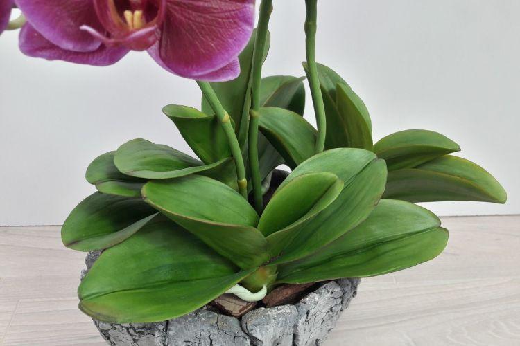 Болезни листьев у орхидеи: описания с фото, лечение