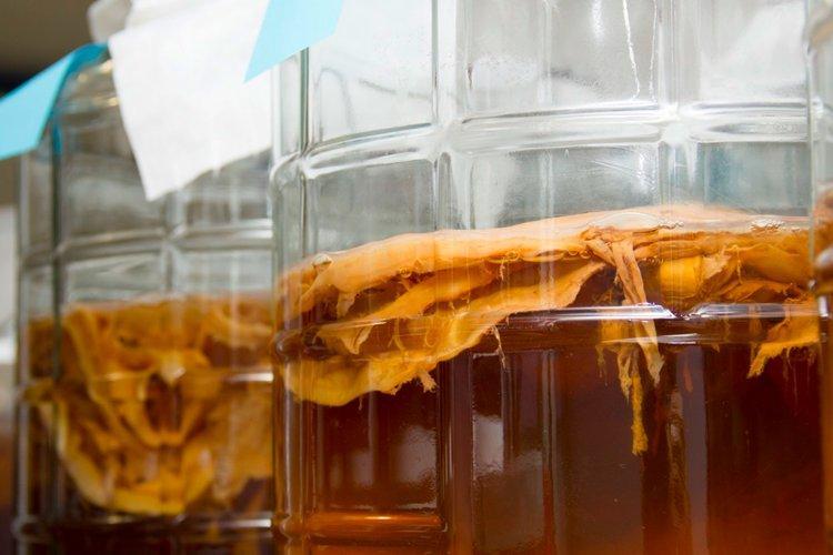 Температура и освещение - Уход за чайным грибом