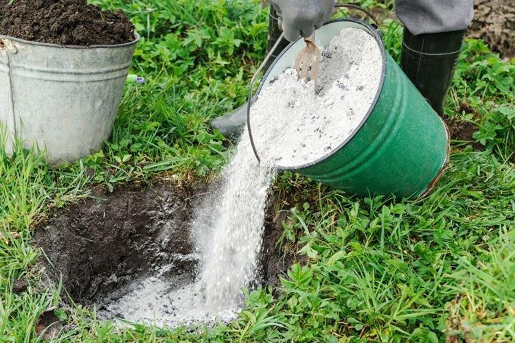 Как раскислить почву на огороде золой