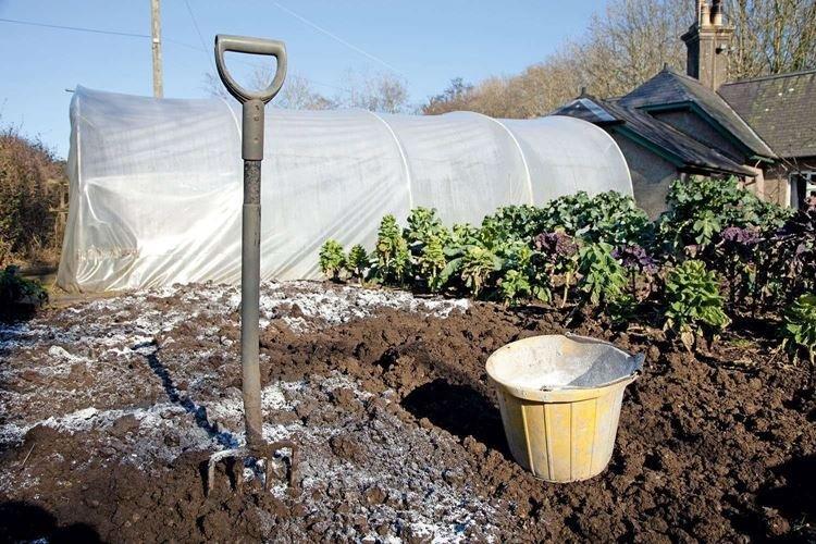 Как раскислить почву на огороде доломитовой мукой