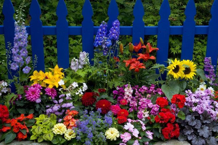 Цветы для клумбы: фото с названиями (каталог)