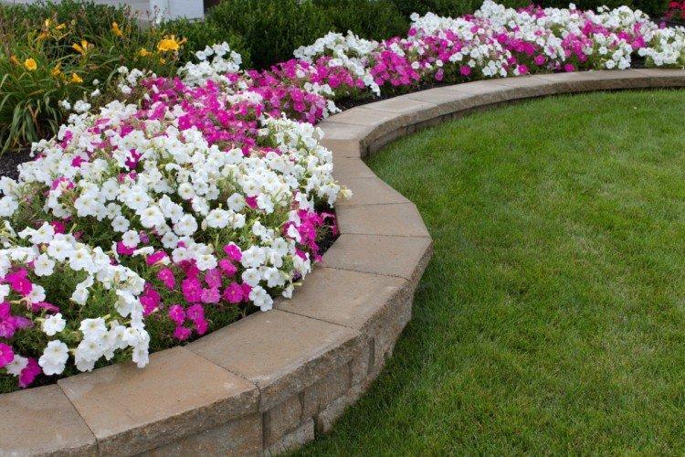 Особенности и требования - Цветы для клумбы
