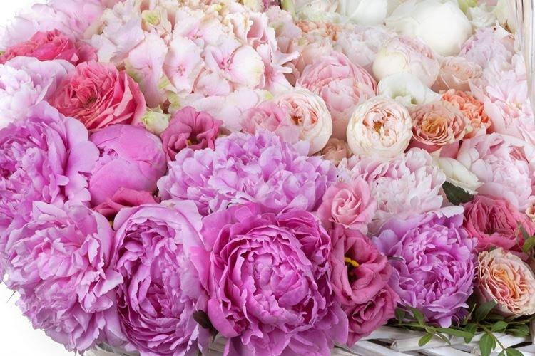 Пион - Цветы похожие на розы