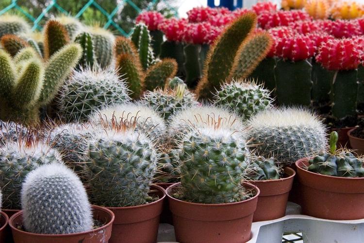 Температура - Уход за домашними кактусами
