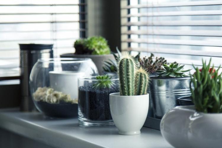 Освещение - Уход за домашними кактусами