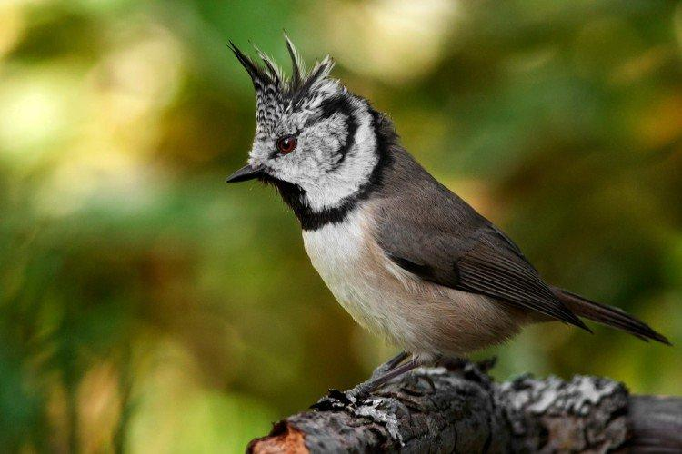 Птицы Ленинградской области: фото, названия и описания (каталог)
