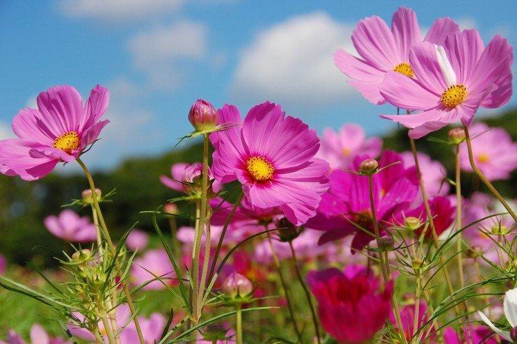 Розовые цветы: названия, фото и описания (каталог)