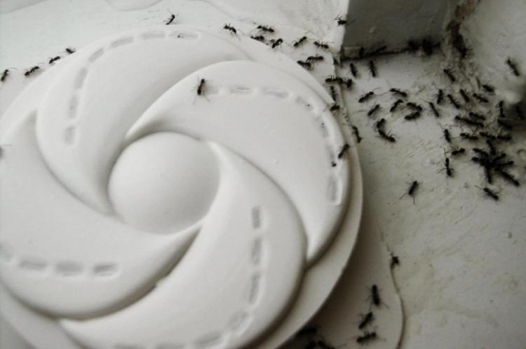 Ловушки - Как избавиться от муравьев в доме и квартире