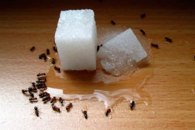 Народные средства - Как избавиться от муравьев в доме и квартире