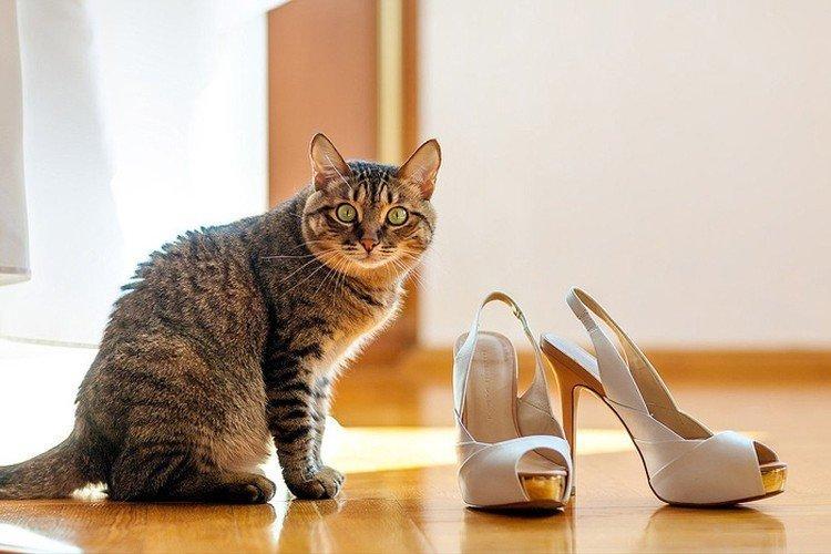 Убираем запах кошачьей мочи с обуви и одежды