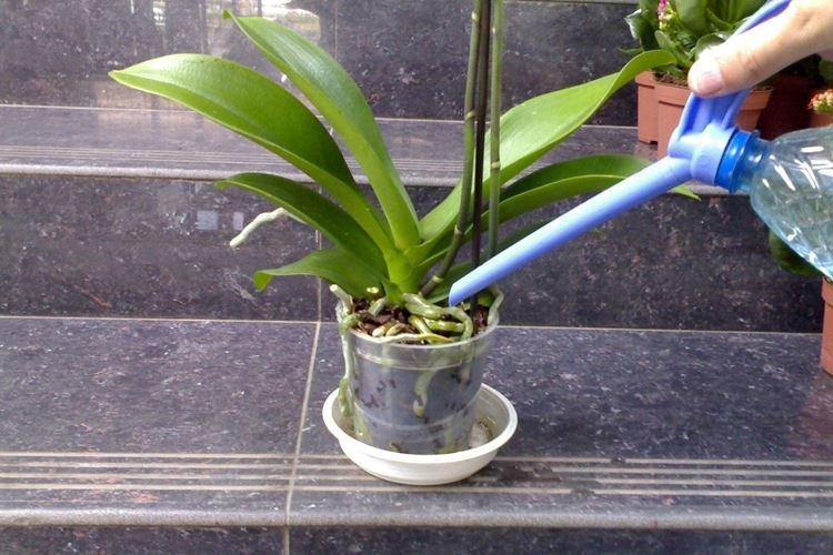 Как поливать орхидею летом