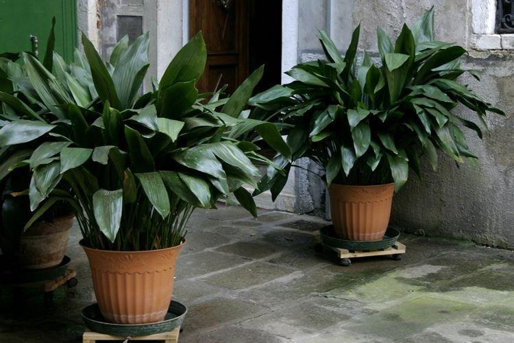 komnatnye-cvety-foto-656-27344.jpg