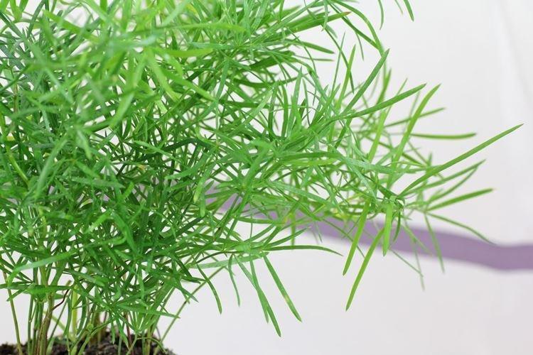 komnatnye-cvety-foto-656-27352.jpg