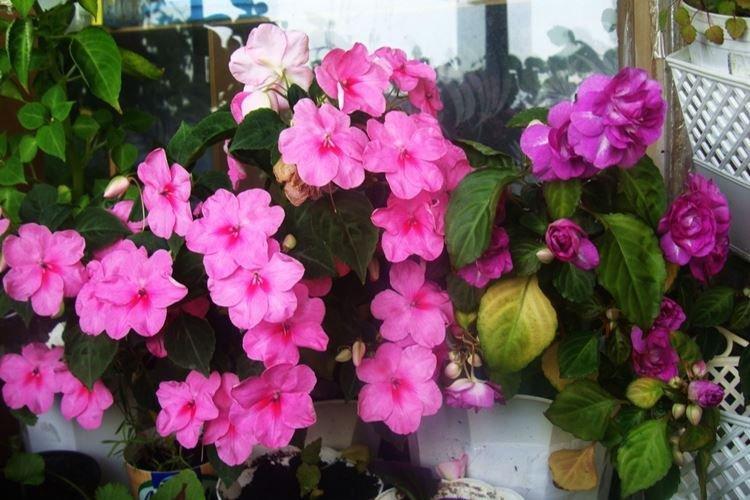 komnatnye-cvety-foto-656-27354.jpg