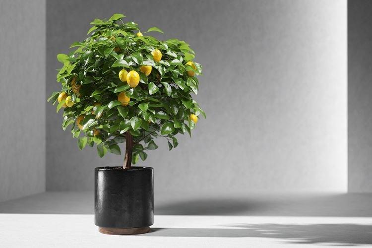 komnatnye-cvety-foto-656-27415.jpg