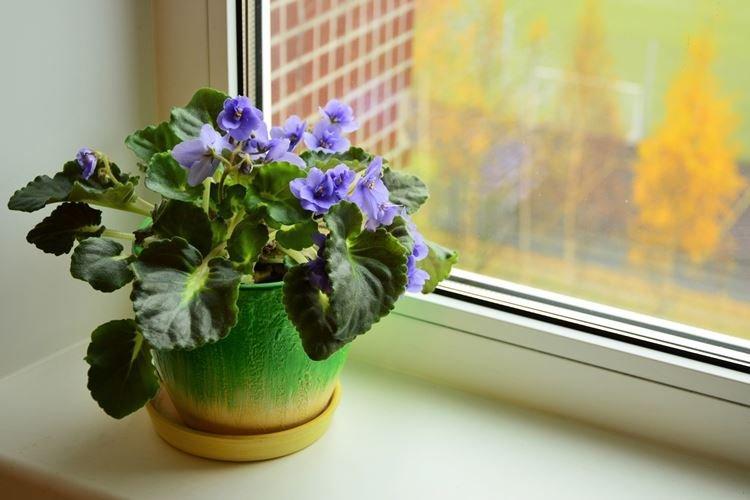 komnatnye-cvety-foto-656-27417.jpg