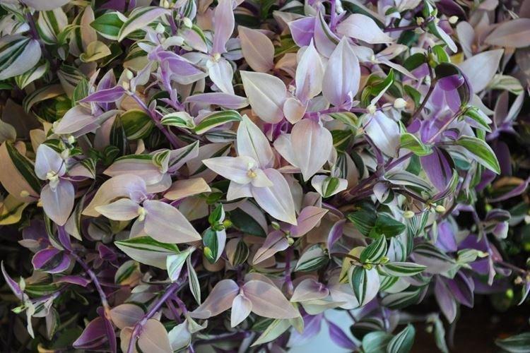 komnatnye-cvety-foto-656-27419.jpg