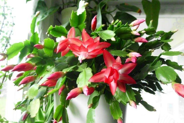 komnatnye-cvety-foto-656-27425.jpg