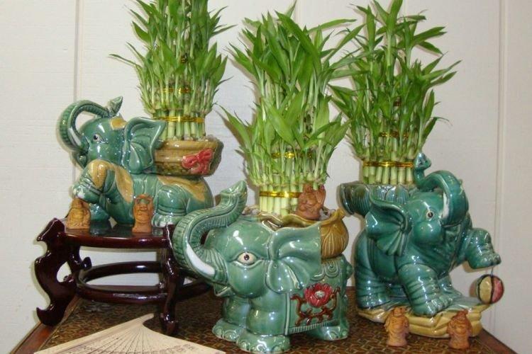 Бамбук - Комнатные цветы которые должны быть в каждом доме