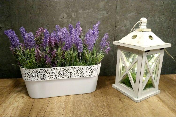 Лаванда - Комнатные цветы которые должны быть в каждом доме