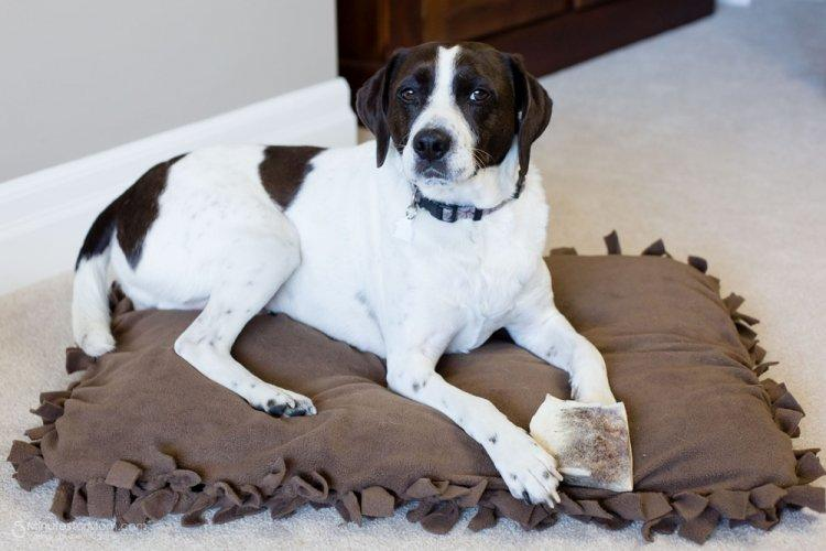 Лежанка с бахромой - Лежанка для собаки своими руками