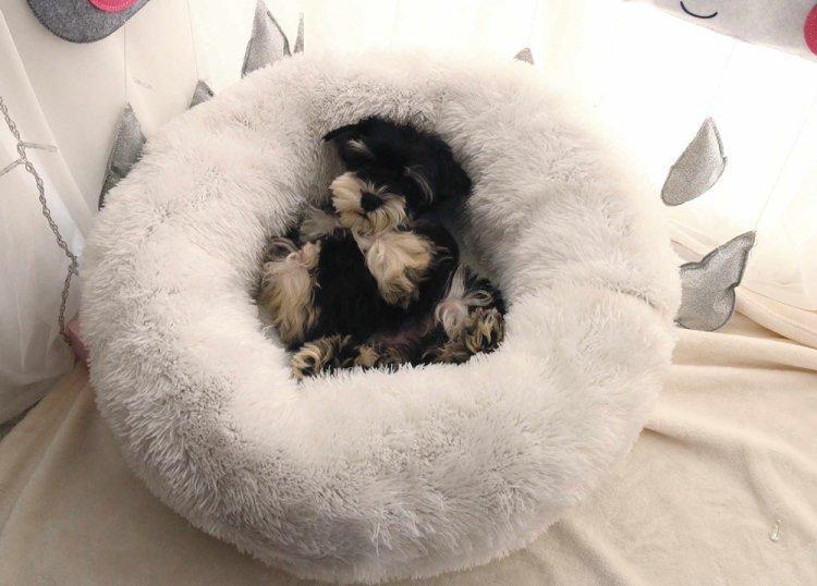 Лежанка для собаки своими руками - фото и идеи