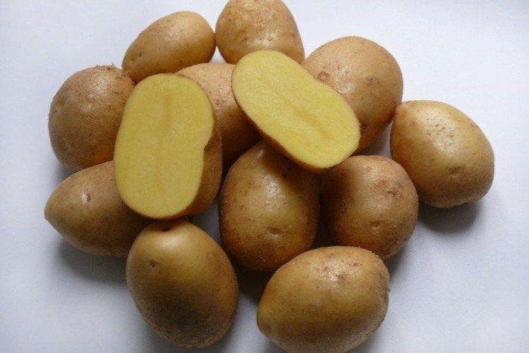 Импала - Ранние сорта картофеля