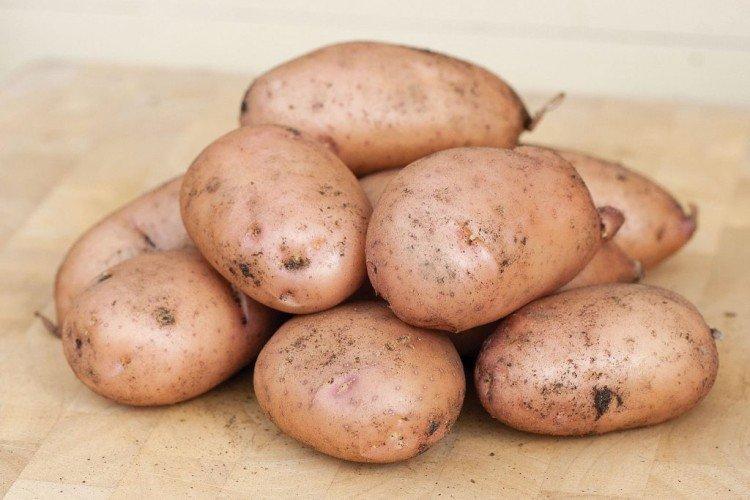 Жуковский ранний - Ранние сорта картофеля