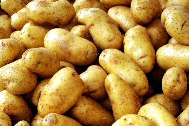 Каратоп - Среднеспелые сорта картофеля