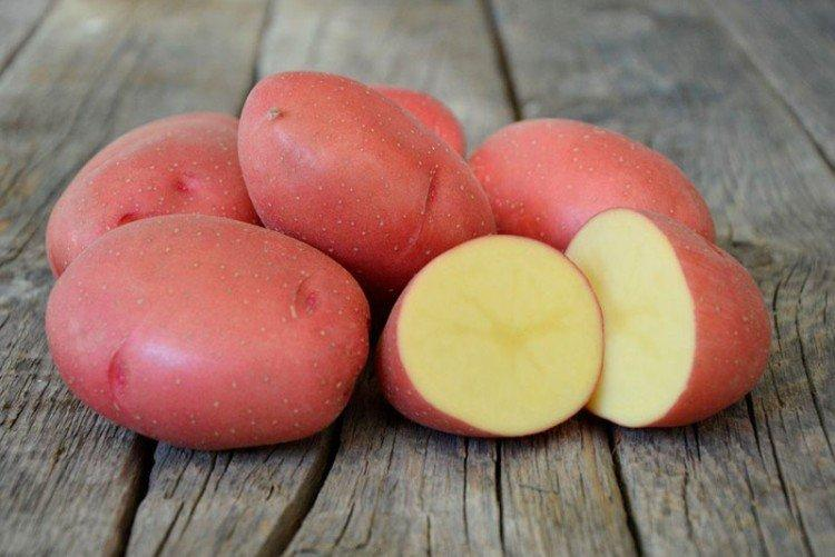 Розара - Среднеспелые сорта картофеля