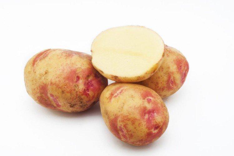 Пикассо - Поздние сорта картофеля