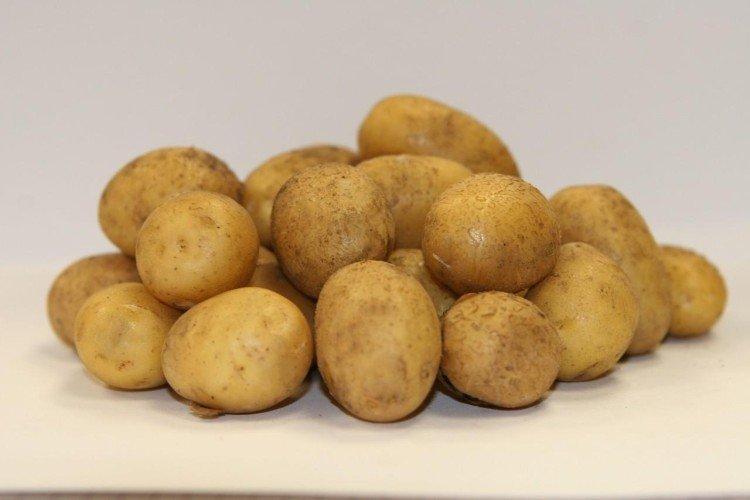 Латона - Лучшие сорта картофеля для Ленинградской области
