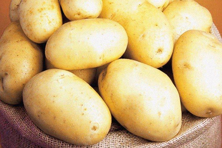 Кубанка - Российские сорта картофеля