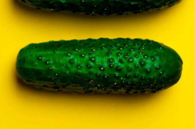 Сюзанна - Самые высокоурожайные сорта огурцов