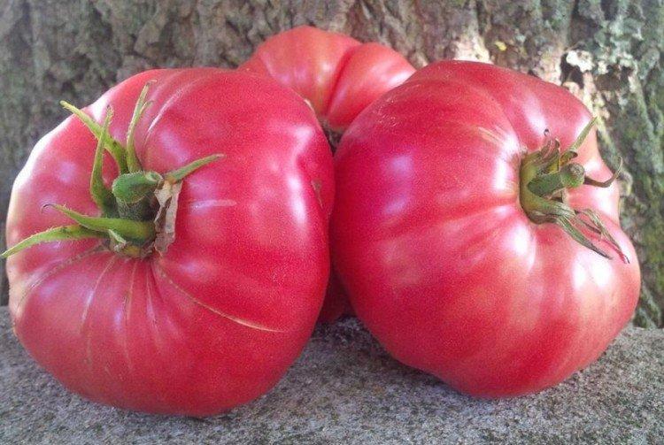 Сахарный бизон - Среднеспелые сорта томатов для Подмосковья