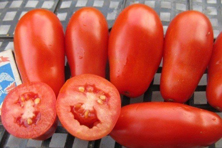 Французский гроздевой - Поздние сорта томатов для Подмосковья