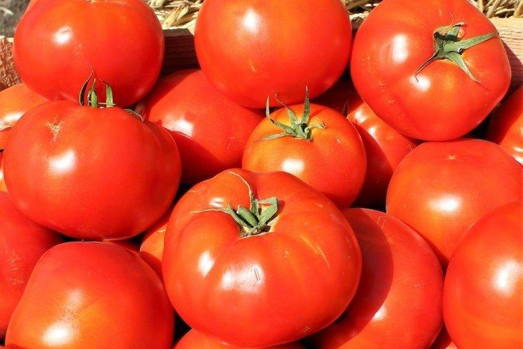 Бобкат - Поздние сорта томатов для Подмосковья