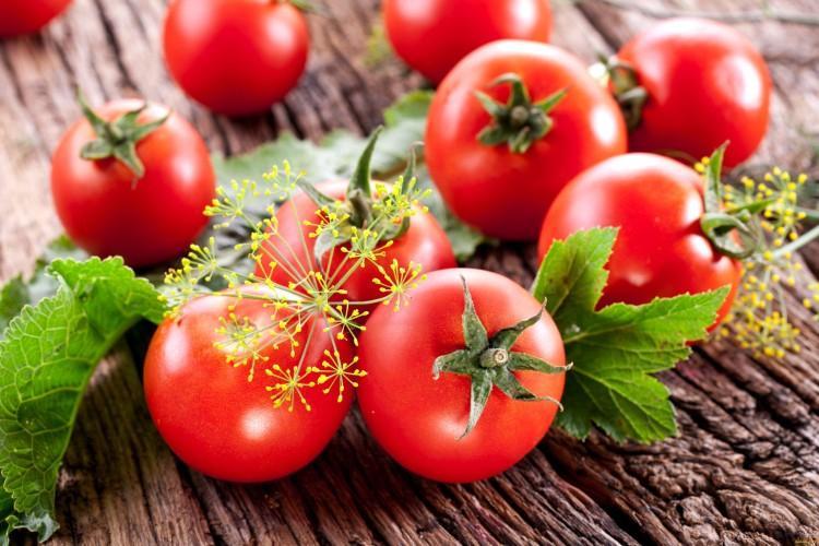 Лучшие сорта томатов для теплиц: фото, названия и описания (каталог)
