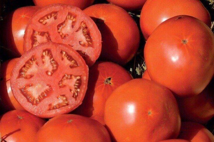 Бобкат - Сорта томатов для теплиц из поликарбоната
