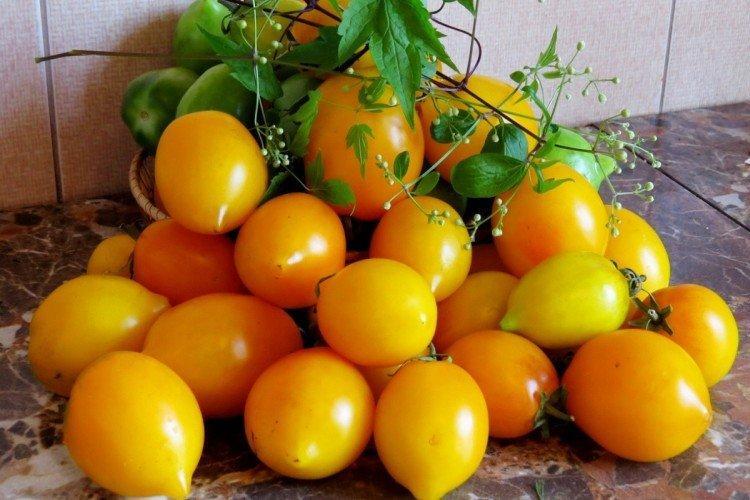 Цитрусовый сад - Средние и поздние сорта томатов для теплиц
