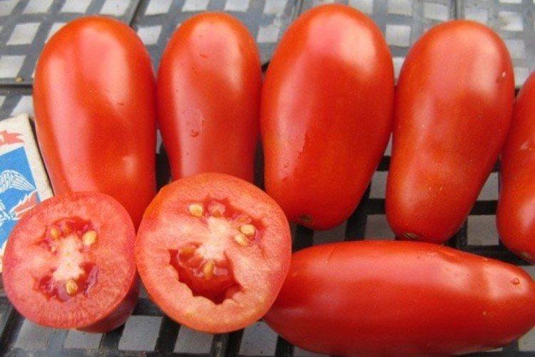 Французский гроздевой - Средние и поздние сорта томатов для теплиц