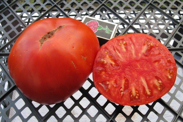 Король королей - Крупноплодные сорта томатов для теплицы