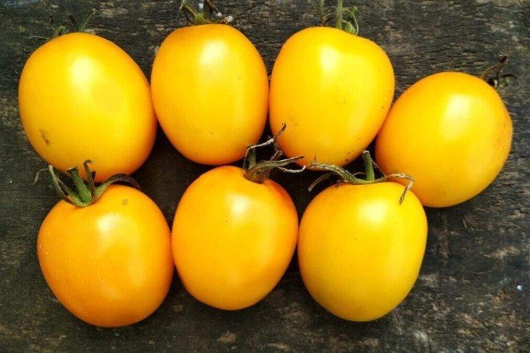 Де Барао - Лучшие сорта томатов для теплиц в Подмосковье