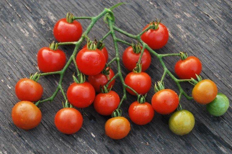 Сладкая гроздь - Лучшие сорта томатов для теплиц в Подмосковье