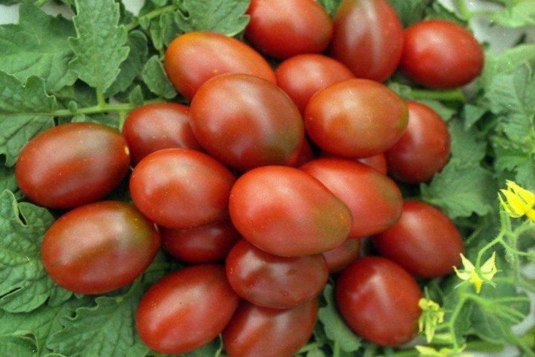 Де Барао - Поздние сорта томатов