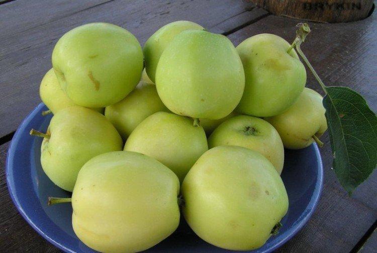 Дымчатый аркад - Летние сорта зеленых яблонь