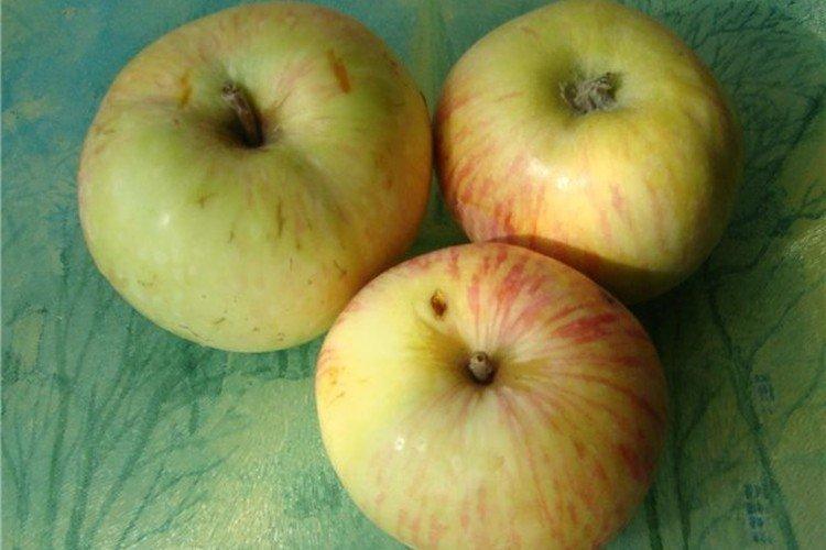 Белое астраханское - Летние сорта зеленых яблонь