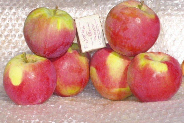 Анис свердловский - Осенние сорта зеленых яблонь