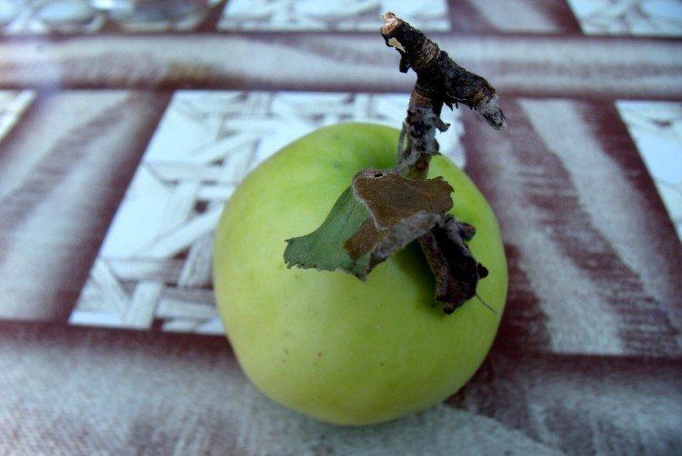 Ахтубинское - Осенние сорта зеленых яблонь
