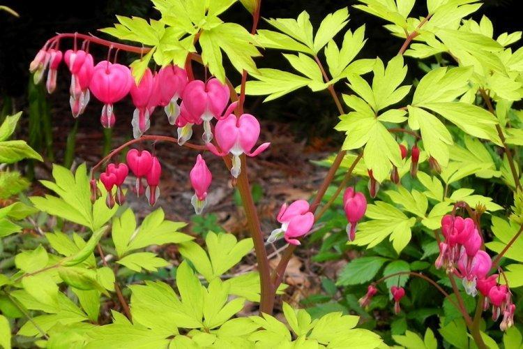 mnogoletnie-cvety-dlya-dachi-foto-612-25769.jpg